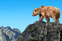 Wo Bären in Europa besonders gut angesiedelt werden können
