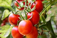 Pomodori: Eine Geschichte über die Seele der italienischen Küche