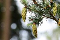 Mit Glück bekommen wir Mittelmeerklima, sagt ein Forstwissenschaftler über Klimawandel und Waldzustand