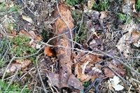 Pilzsammler findet scharfe Weltkriegsgranate nahe Abenteuerspielplatz