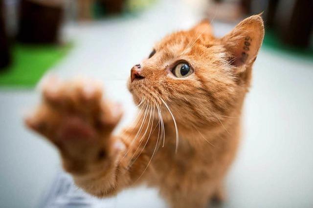 Schon wieder Katzen-Razzia in Norsingen - 85 Tiere befreit