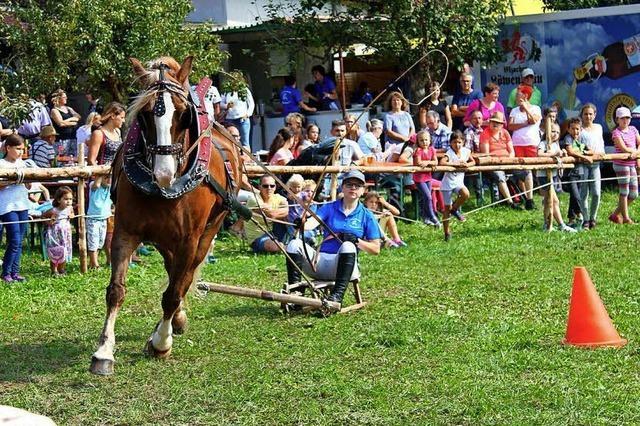 Mensch und Pferd im Einklang