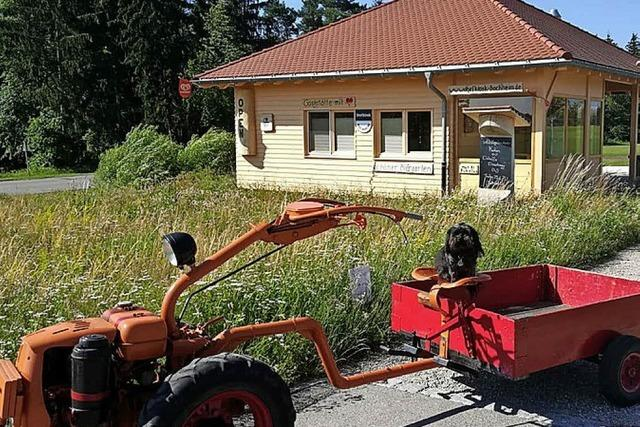 Alte Arbeitspferde auf einer Achse
