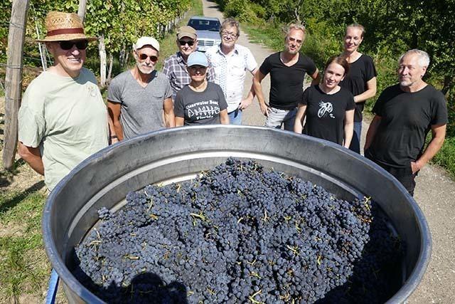Fotos: So wird Wein aus den Trauben vom Hausberg Tüllinger