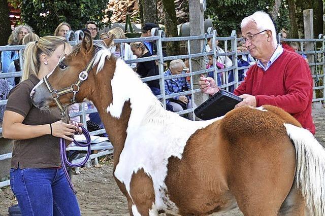 Eldorado für Pferdeliebhaber