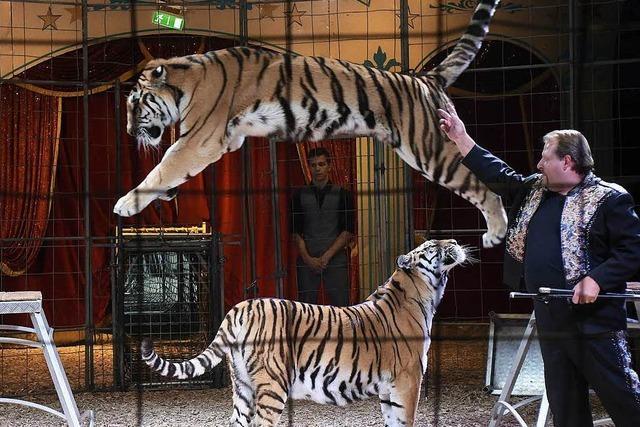 Fotos: Circus Manuel Weisheit gastiert auf dem Messegelände Freiburg