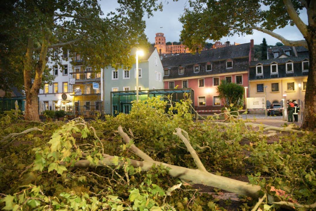 Abgebrochene Äste in Eppelheim bei Heidelberg.  | Foto: dpa