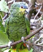 Papagei bleibt verschollen