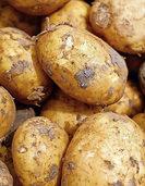 Kartoffelmarkt am Naturena Badesee