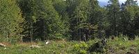 Das Klima setzt dem Wald zu