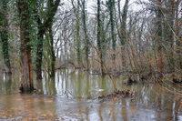 Vier Gemeinden und eine BI kämpfen gegen Flächenflutungen im Rheinwald