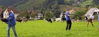 Hochbetrieb beim Viehabtrieb