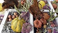 Herbst- und Kürbisfest auf dem Gelände des Freiburger Tiergeheges