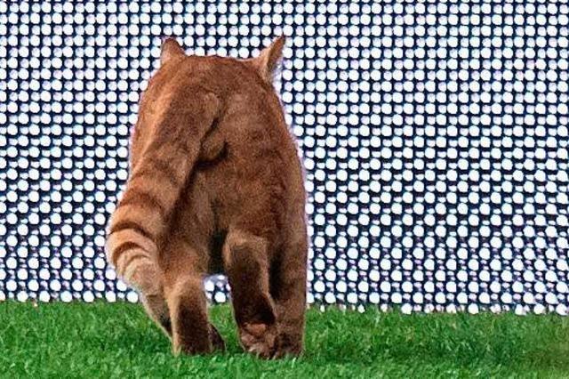 Unbekannter schießt auf Katze in Merzhausen – Tier muss eingeschläfert werden