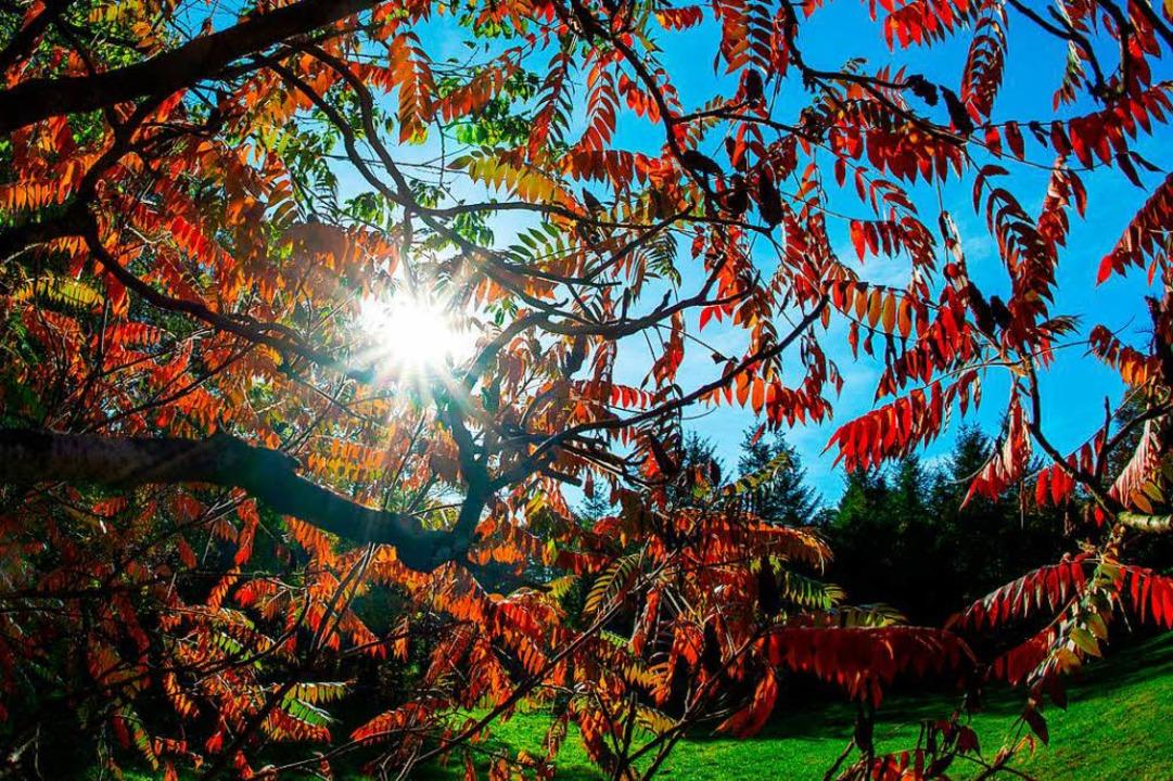Perfektes Herbstwetter (Symbolfoto)  | Foto: dpa