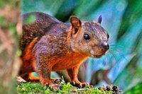 Mäuse und Bunthörnchen übertragen tödliches Bornavirus