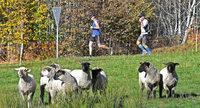 Ein Marathon als Sommermärchen