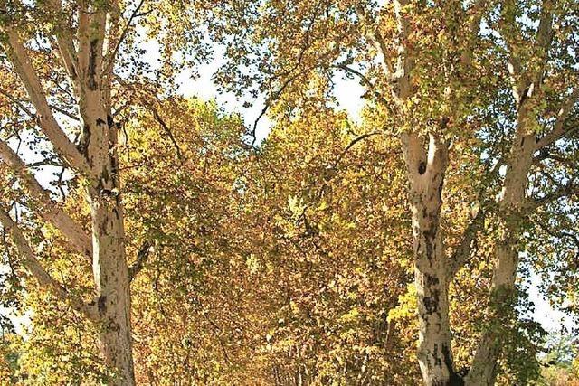 Goldener Oktober bricht den Rekord des Jahres 2013