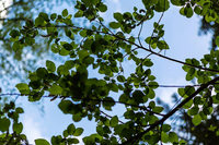 Saint-Louis erlebt einen Bauboom und möchte grüner werden