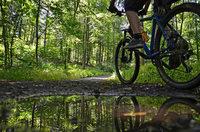 """Forstingenieur: """"Die illegalen Mountainbike-Trails sperren wir mit Totholz"""""""