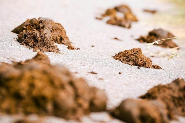 Pferdeäpfel auf Gehwegen sorgen für Ärger in Rheinfelden