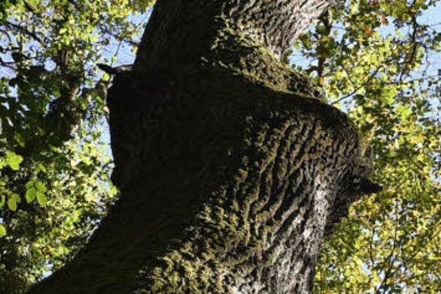 Vielfalt im Wald bringt Vorteile