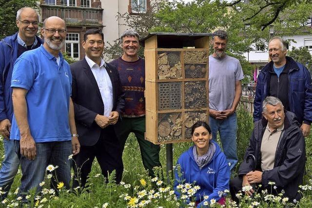 Neue Heimat für die Furchenbiene