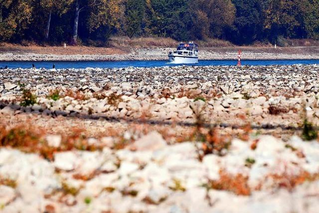 Wasser im Rhein wird knapp - Tiefststand von 2003 unterschritten