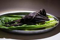 """In Malmö gibt es bald ein """"Museum für ekliges Essen"""""""