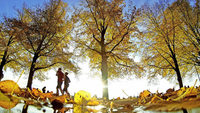 Herbstlauf durch Herbstlaub in Bad Krozingen