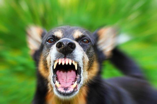 Zwei Menschen verletzt, zwei Hunde lädiert: Bekanntschaft scheitert an Beißerei