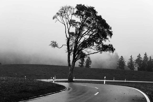 Mystische Orte im nebeligen Schwarzwald