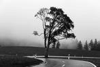 Fotos: Mystische Orte im nebeligen Schwarzwald