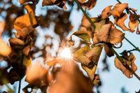 Mehr als ein Drittel der Bäume im Südwesten sind krank