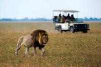 Das Shumba-Camp in Sambia ist berühmt für seine Löwen