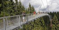 Hängebrücke über Tannen