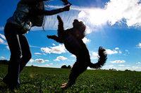 Spaziergänger dürfen freilaufende Hunde laut Gericht abwehren