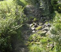 Trockenperiode macht Anglern Sorgen