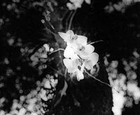 Bäume, Blumen, Steine in schwarz-weiß. Fotografien in der Denzlinger Rocca-Fabrik