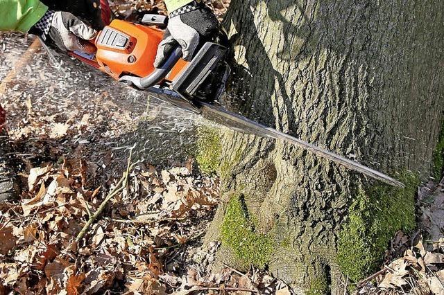 Trockener Sommer setzt Bäumen in Vörstetten zu