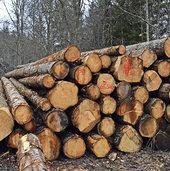 Holzpreise im freien Fall