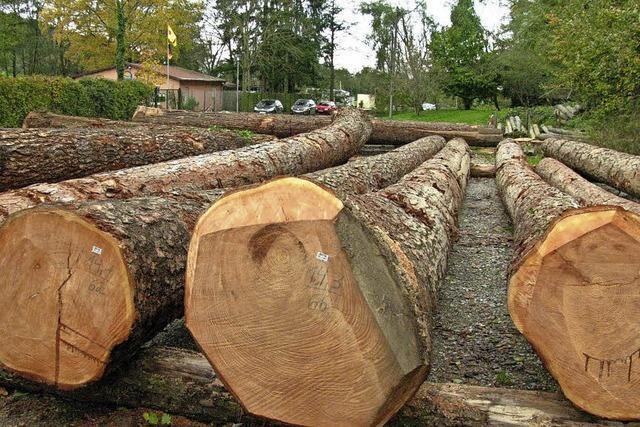 Forst bringt Münstertal 135 000 Euro Gewinn