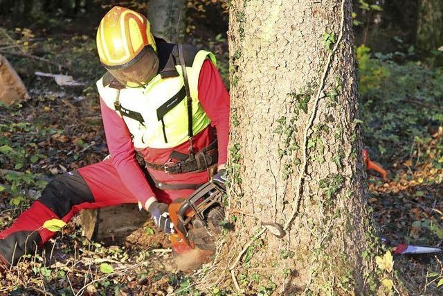 Stürme schlagen tiefe Wunden in die Waldbestände