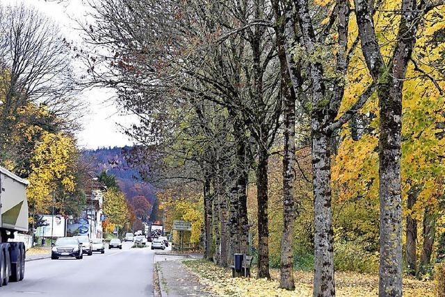 Kranke Bäume müssen weichen