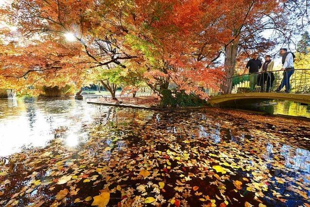 Herbstliches Farbenspiel in Freiburg