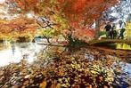 Fotos: Herbstliches Farbenspiel in Freiburg