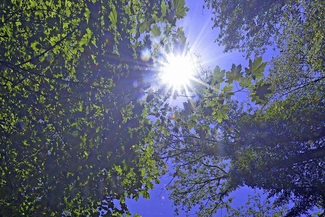 Borkenkäfer beschert Murgs Wald hohen Gewinn
