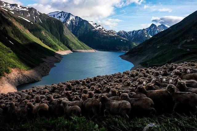 Mit einem Schäfer unterwegs in den französischen Alpen