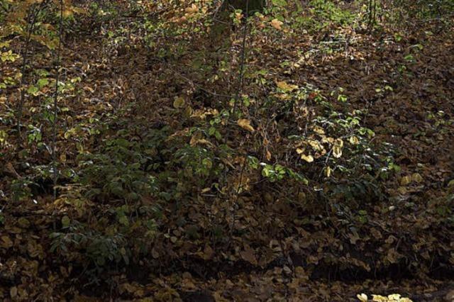 Trockenjahr setzt dem Wald zu