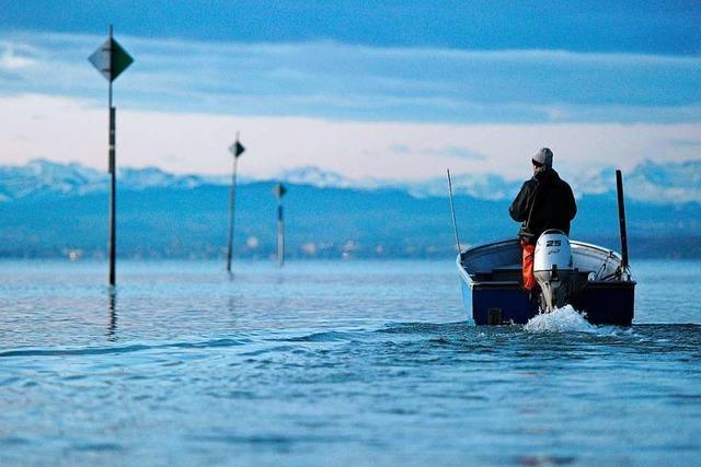 Lage der Berufsfischer am Bodensee bleibt schwierig